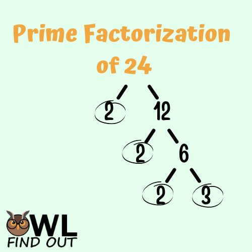 Prime factorization of 24: factor tree